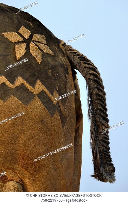 India, Rajasthan, Pushkar camel fair, Elaborately decorated camel
