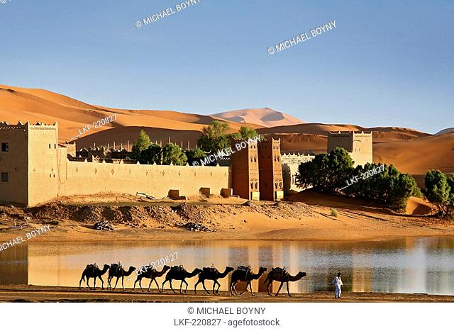 Caravan of camels in front of Auberge Yasmina at the dunes of Erg Chebbi desert, Morocco, Africa