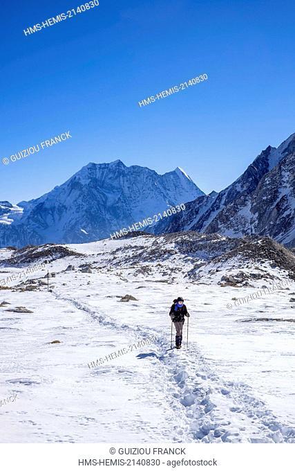Nepal, Gandaki zone, Manaslu Circuit, between Dharamsala and Bimthang, climb to the Larkya Pass, Samdo Peak (alt.6335m) in the background