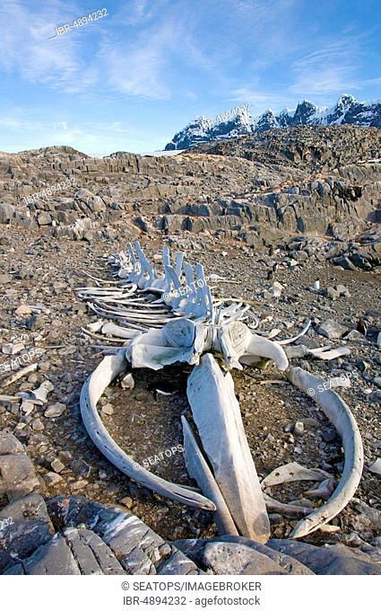 Whale skeleton on the coast of Goudier Island, Antarctica