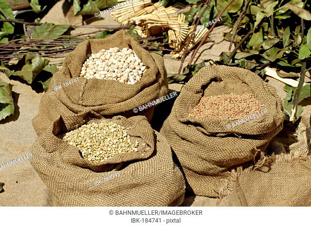 Dried legumes in gunnysacks pees chickpea lentils