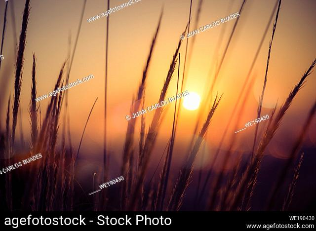 Golden sunrise in the Doñana Nature Park