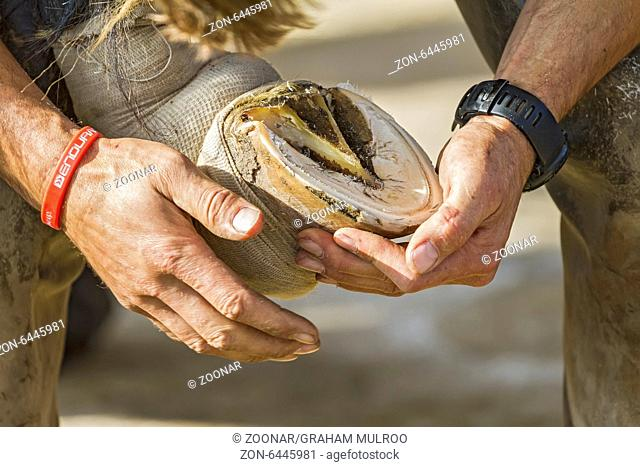 Checking Horse's Hoof After Shoe Removal UK