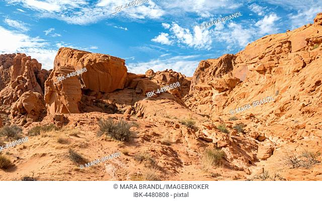 Rainbow Vista, red sandstone cliffs, Mojave Desert, Valley of Fire, Nevada, USA