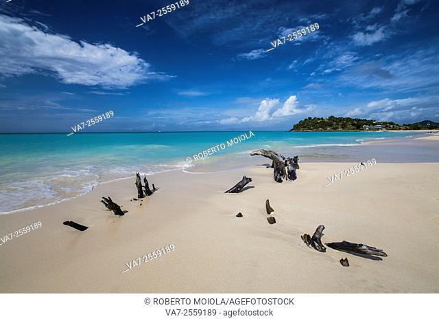 Remains of tree trunks on the heavenly turquoise sea of Fryers Beach. Antigua. Leeward Islands. West Indies. Caribbean. Central America