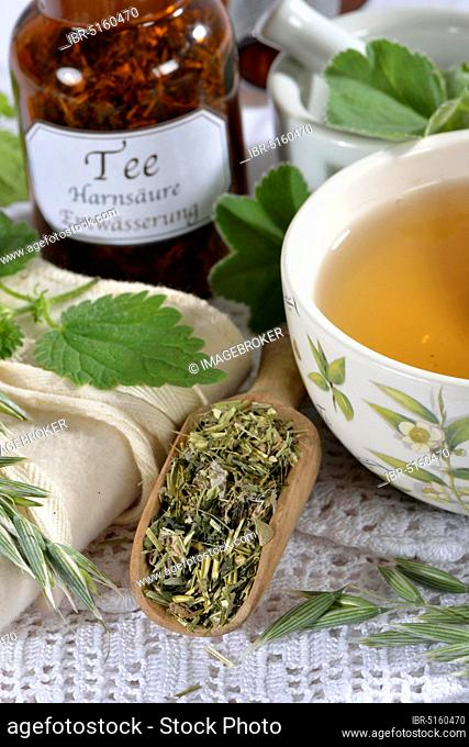 Oat herb, oat straw, nettle, Alpine lady's mantle (Avena sativa) (Urtica dioica) (Alchemilla alpina), green oat tea