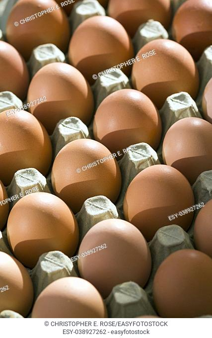 A tray of fresh free range eggs in morning sunlight. Shallow depth of field