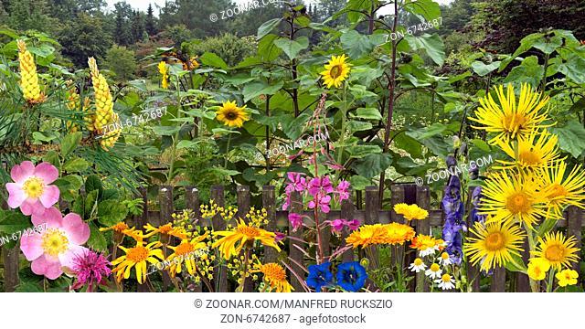Bauerngarten, Heilpflanzenarrangement, heilpflanzen