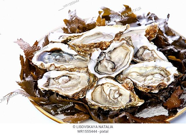 Open oyster Super Speciale with seaweed and ice on white background