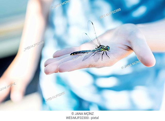 Dragonfly on boy's hand