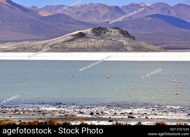 Salar de Surire Natural Monument. Norte Grande de Chile