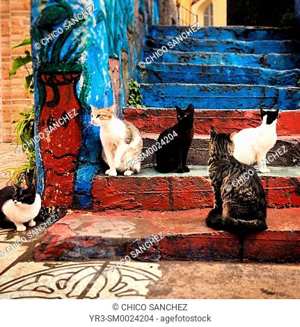 Free street cats wait outside a butcher shop in Tangier, Morocco, Africa