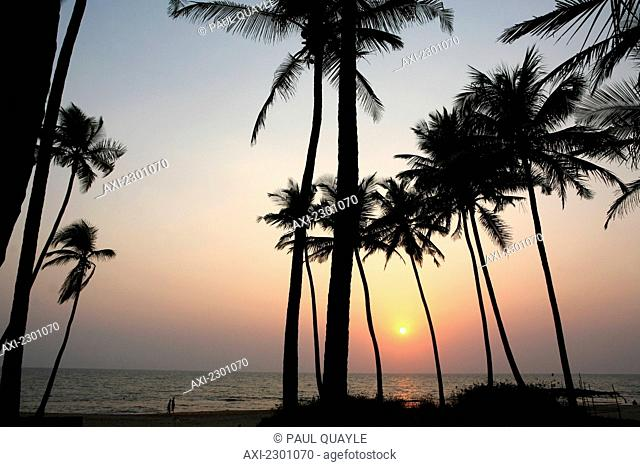 Palm trees at sunset, Anjuna Beach, Goa State, India, Asia.Ê