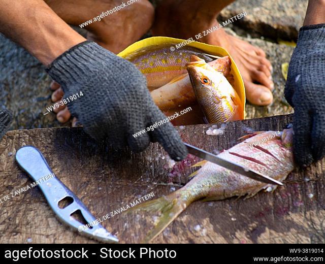 Fisherman Hands PREPARING FISH, Dominican Republic