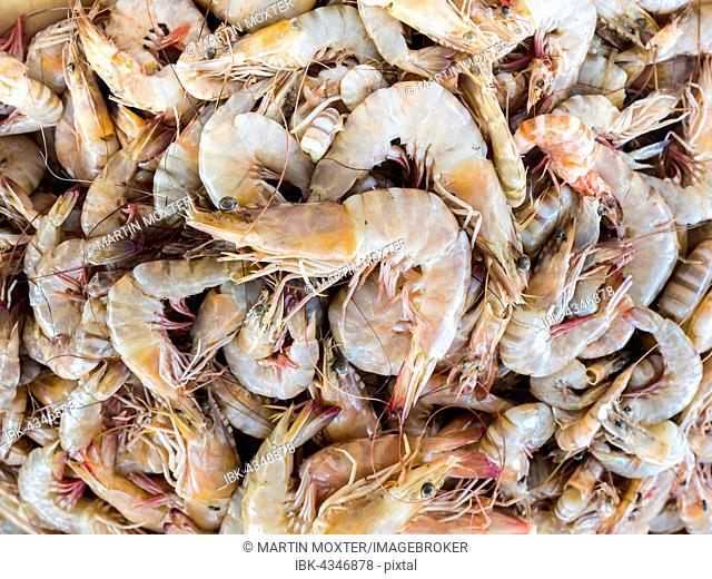 Fresh shrimps at fish market, Barka, Oman