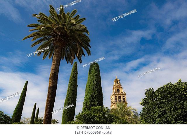 Spain, Andalusia,Cordoba, Minaret of Great Mosque of Córdoba behind trees