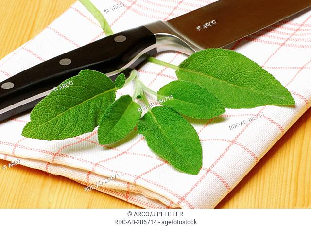 Sage / Salvia officinalis / Garden Sage, knife