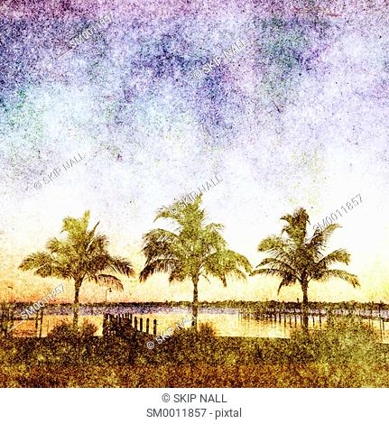 Three palm trees on the shoreline of the Manatee River in Florida