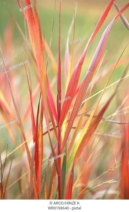 Blades, of, grass, Switzerland