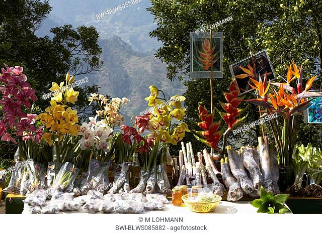 cymbidium orchid, hybrid Cymbidium-Hybride, with Heliconia and crane flower, selling flowers on the road, Portugal, Madeira