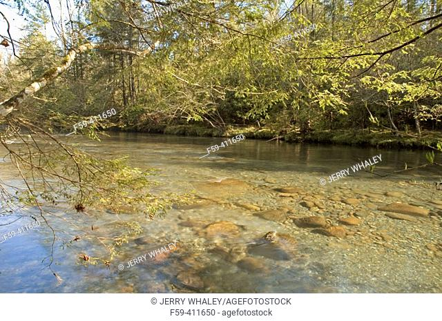 Little Pigeon River in spring. Great Smoky Mountains National Park. Tennessee. USA