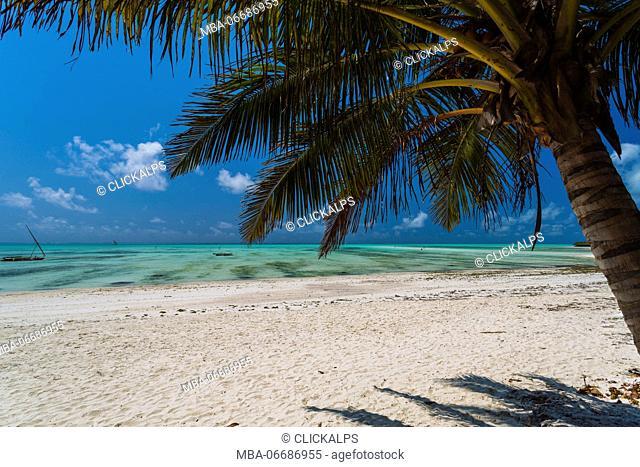 Beach and palm in Jambiani, Zanzibar, Tanzania, Africa