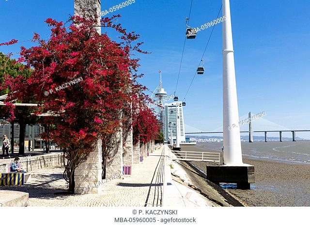 Blooming Bouganvilea in front of a ropeway at the Vasco da Gama Tower and bridge, Parque das Nacoes, Oriente district