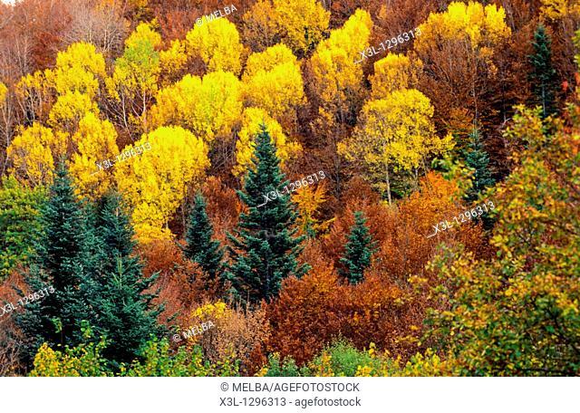 Irati forest  Navarre  Spain