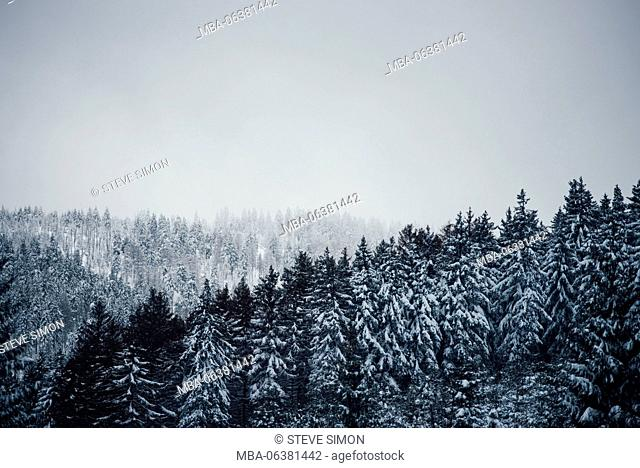 View over the winter forest, Harz, Schierke, Germany