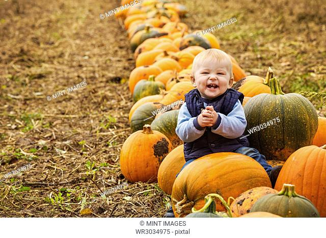 A small boy sitting among rows of bright yellow, green and orange pumpkins laughing and clapping his hands