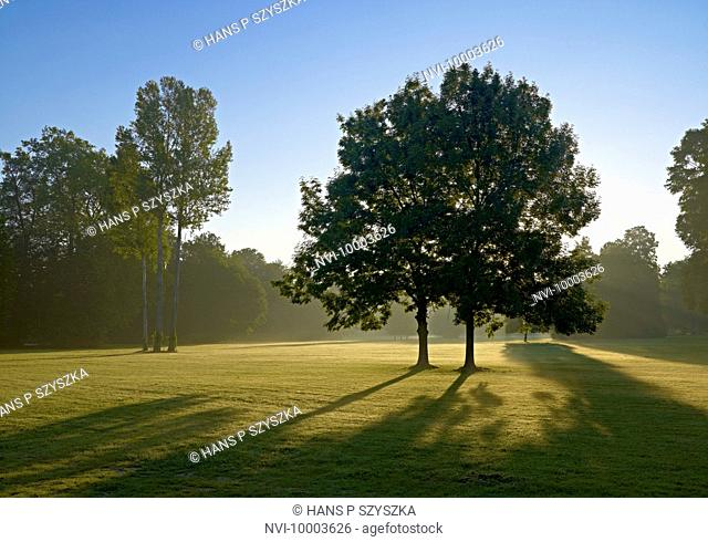 Morning light in Muskau Park, Bad Muskau, Upper Lusatia, Saxony, Germany