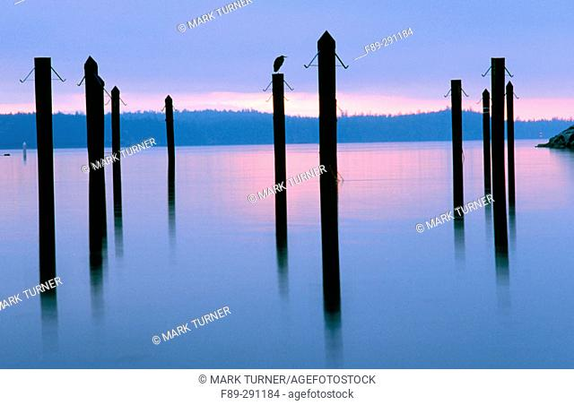 Sunrise over harbor pilings. Sidney-by-the-Sea. British Columbia, Canada