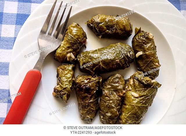 Greek Cuisine. Fresh Dolmades