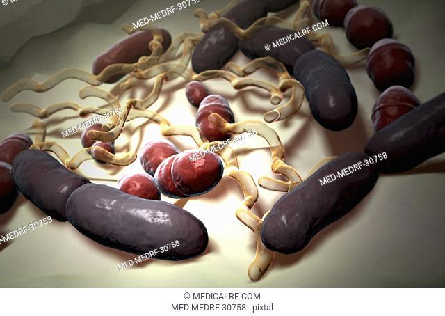 Bacteria types