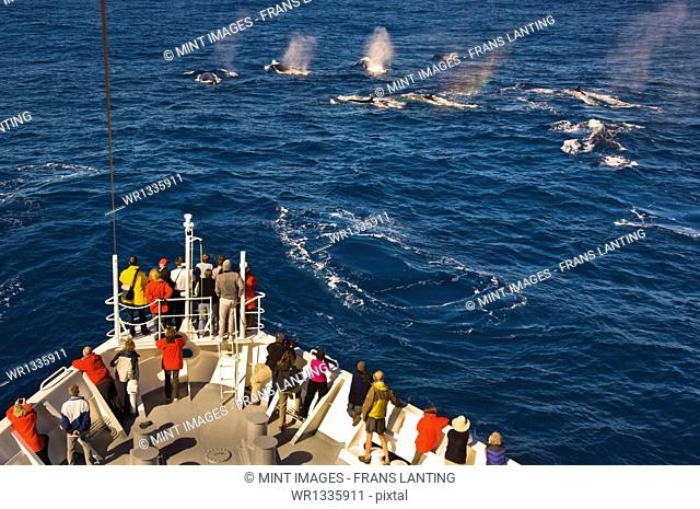 Tourists watching fin whales, Balaenoptera physalus, from a cruise ship, off the coast of South Georgia Island in the Falkland Islands