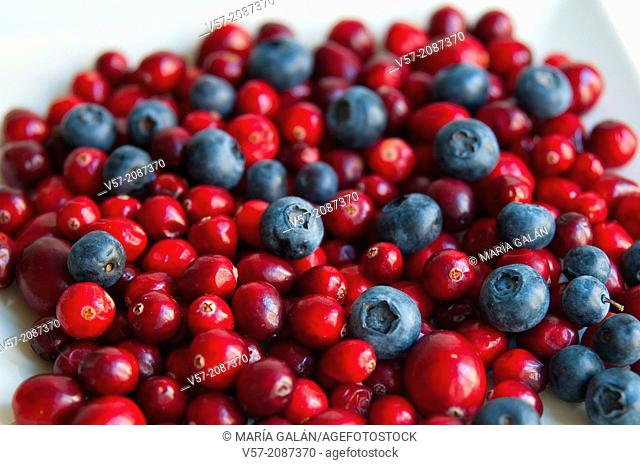 Assorted blueberries. Close view