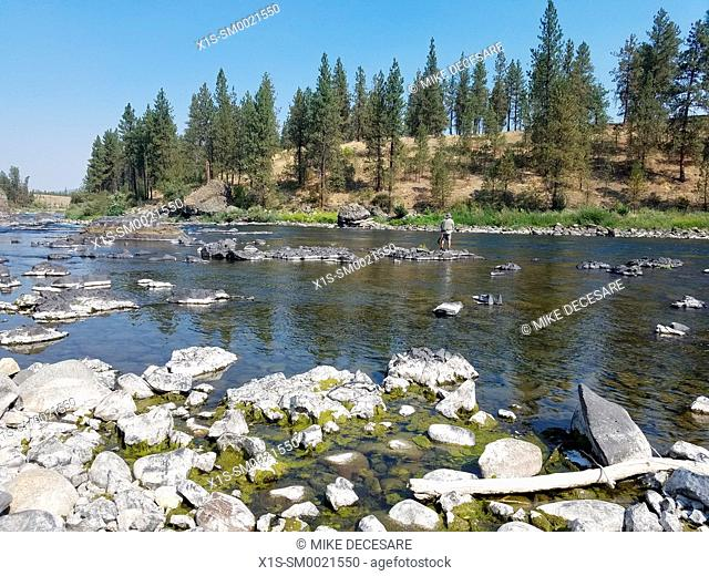 A Fly-Fisherman casting his line in the Spokane River at Riverside State Park in the State of Washington, USA