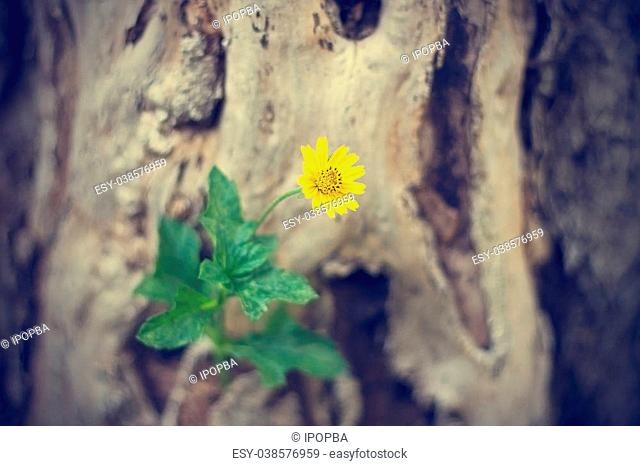 yellow flower growing on dead tree, soft focus, vintage color tone
