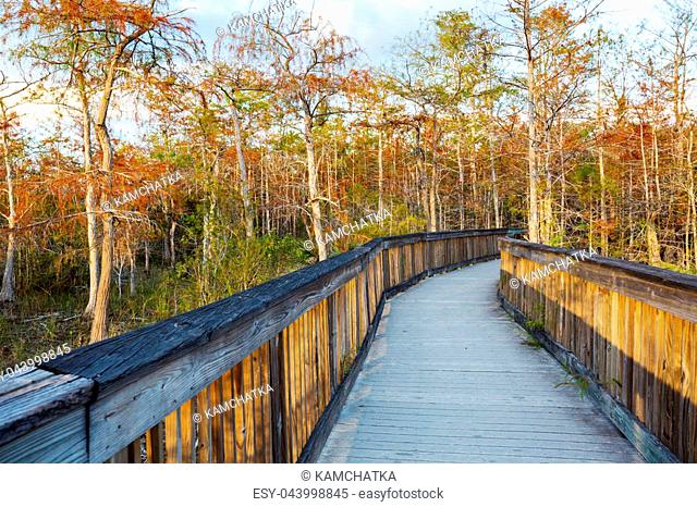 Boardwalks in the swamp in Everglades National Park, Florida, USA