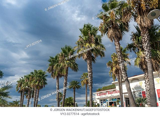 Palm trees on the beach promenade, Saint-Raphael, Var, Provence-Alpes-Cote d`Azur, France, Europe