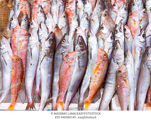Medterranean fish exposed at open seamarket, Naples