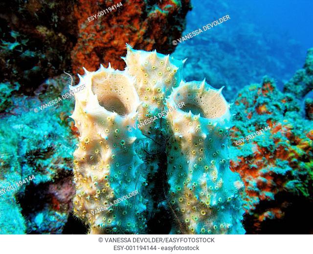 Fauna and flora in the Caribbean sea around Bonaire, Dutch Antilles