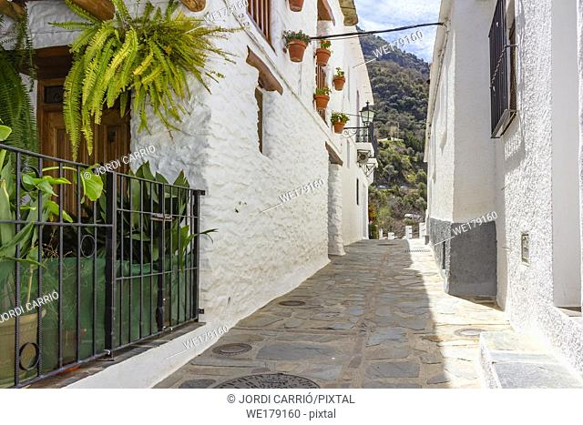 Pampaneira, Andalusia, Spain: View of a street with flower pots decorating the white facades