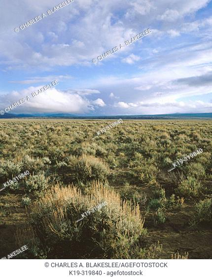 Sageland in eastern Oregon. Malheur County. USA