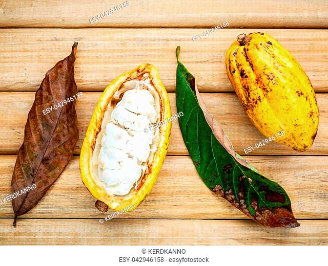 Ripe Indonesia cocoa and cocoa leaves setup on rustic wooden background