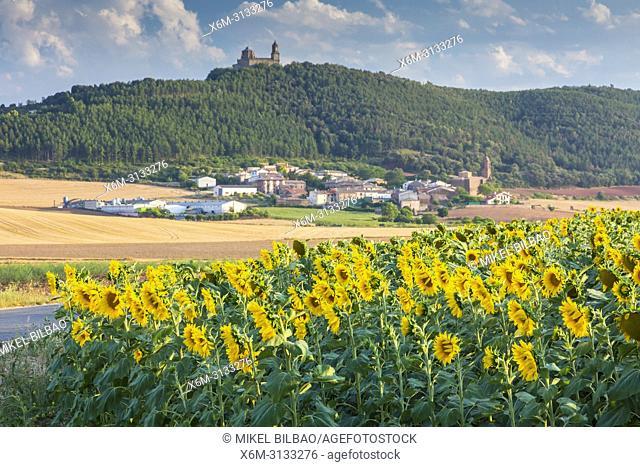 Sunflowers crop, Sorlada village and San Gregorio monastry. Tierra Estella. Navarre, Spain, Europe