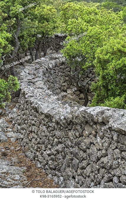 muro tradicional de piedra - Pedre en Sec - Fita del Ram, Esporles, Paraje natural de la Serra de Tramuntana, Mallorca, balearic islands, Spain
