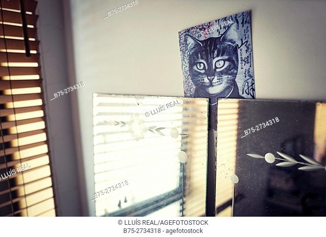 Mirror and poster of cat inside room