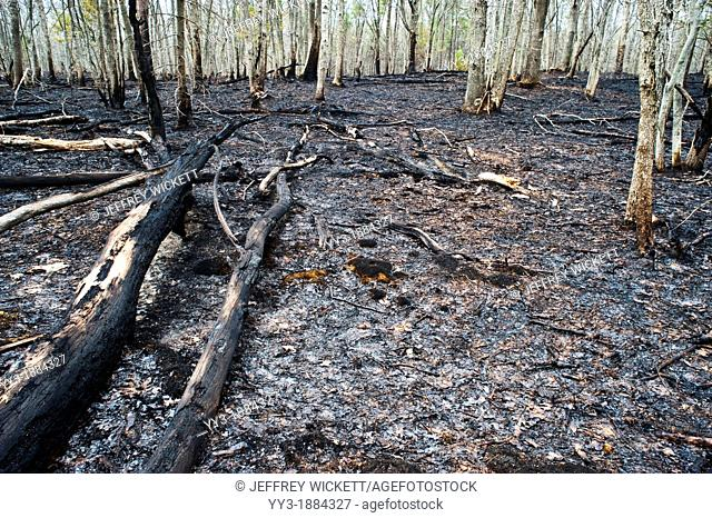 Two days after 2000 acre controlled burn in Michigan