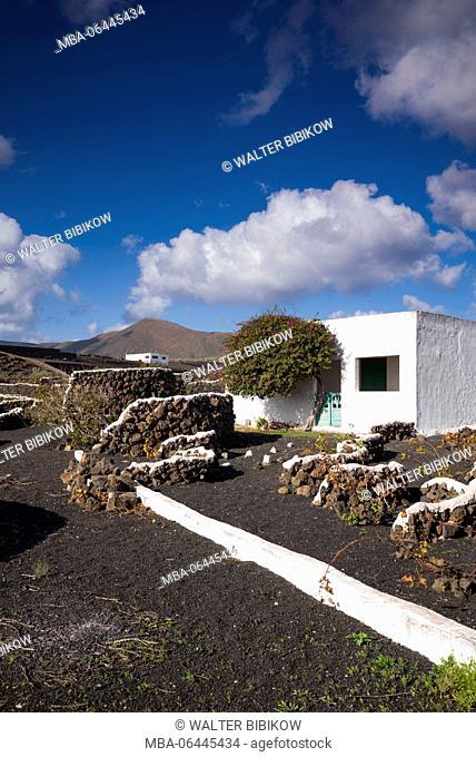 Spain, Canary Islands, Lanzarote, El Capitan, volcanic soil vineyards